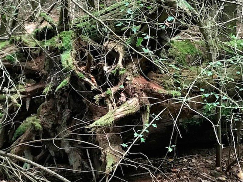 souche d'arbre ou animal étrange